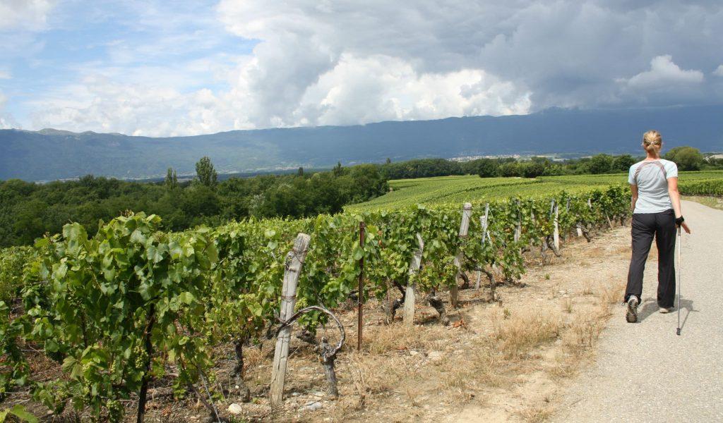 Vignes-de-Soral-2012